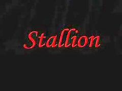 Big ass stallion